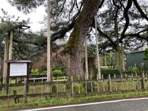 巴御前松公園