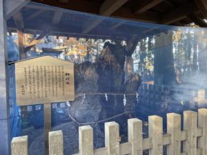生品神社の御神木
